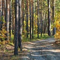 Осенний бор :: Дмитрий Конев