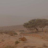 Негев,приближение песчаной бури :: Валерий Цингауз