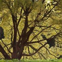 Велосипед под деревом :: Длинный Кот