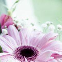 Цветы :: Анастасия Мартынова