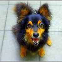 Жила-была собака. :: Валентина ツ ღ✿ღ