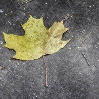 Вот и осень...Как прекрасно.... :: Александр Зотов