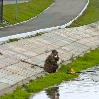 одинокий рыбак :: Юлия Денискина