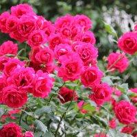 Цветочный хоровод-590. :: Руслан Грицунь