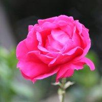 Цветочный хоровод-587. :: Руслан Грицунь