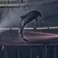 Романтическое ночное шоу в Минском дельфинарии :: Константин Король