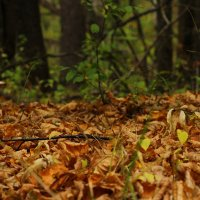 Таинственный лес! :: Наташа Шамаева