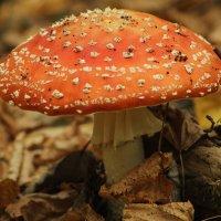 Лесной красавец! :: Наташа Шамаева