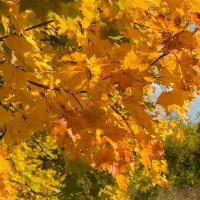 Осень наступает :: Роман Царев