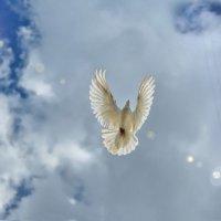 Dao peace Jing (dove and bombers) :: Антон Летов