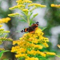 Бабочка :: Роман Домнин