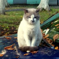 осенний кот Бася :: Александр Прокудин