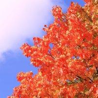 Про осень, небо и краски :: Татьяна Ломтева