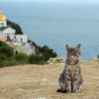 Монастырская кошка. :: Николай Сергиенко