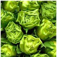 Зеленый цвет :: Elena Bettella