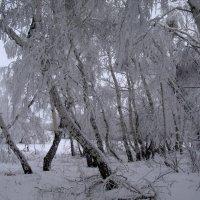 Зимний лес :: Наталья А