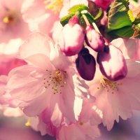 Весной в городе :: Swetlana V