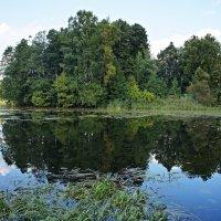 озеро Чухонское (Финское, Ижора) :: Елена Павлова (Смолова)