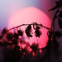 Закаты беспощадны...и прекрасны :: Ирина Сивовол
