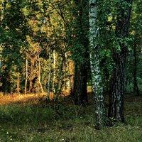 Неторопливы солнышка лучи... :: Лесо-Вед (Баранов)