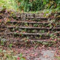 Осенняя лестница :: Наталья Лесовая