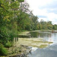 Старица реки Суры :: Лидия (naum.lidiya)