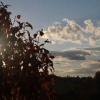 Тёплый вечер в сентябре :: Валерий Чепкасов