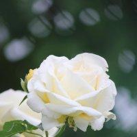 Цветочный хоровод-598. :: Руслан Грицунь