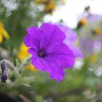 Цветочный хоровод-596. :: Руслан Грицунь