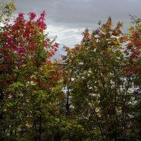 Осень за стеклом моего окна.... :: Юрий