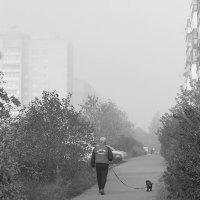 Прогулка в туманное утро :: Вадим Sidorov-Kassil