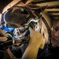 Лошадь на приёме у зубного врача. :: Cветлана Журкина
