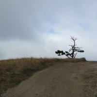 Одиночество... :: Александр Казанцев