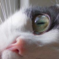 Что можно увидеть в кошачьих глазах? :: Юлия Строчилина