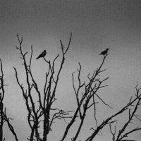 птицы :: Игорь Парицкий