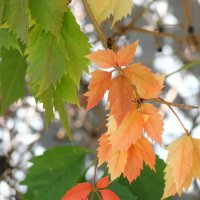 Осень,осень.... :: victor Lion