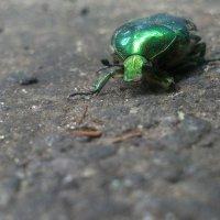 зеленый пешеход :: Александр Прокудин