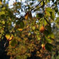 Осень...)) :: VADIM *****