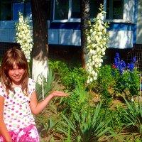 Вот такая юкка растёт в нашем дворе! :: Нина Корешкова