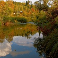 В тайгу пришла осень :: Нина северянка