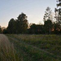 Дорога в поле :: Юрий Тихонов