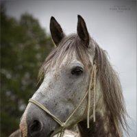 про лошадку :: Виктор Перякин