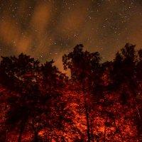 Сказочный лес :: Юлия Игоревна