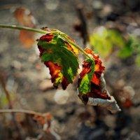 Осенний крап :: Катерина Чебышева
