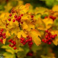 Осень.... :: vcherkun