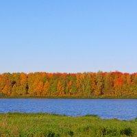 В багрец и в золото одетые леса :: Светлана