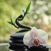 Орхидея, камни и бамбук :: Ирина Приходько