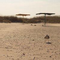 Пустынный пляж :: Артем Дрига