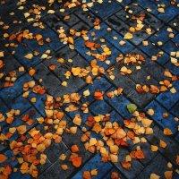 на ковре из желтых листьев.. :: Ольга Заметалова