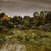 осень :: Рома Григорьев